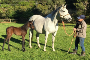 Oldlands Stud Mare and Foal