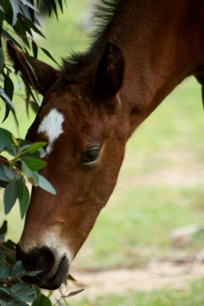 Oldlands Stud Foal