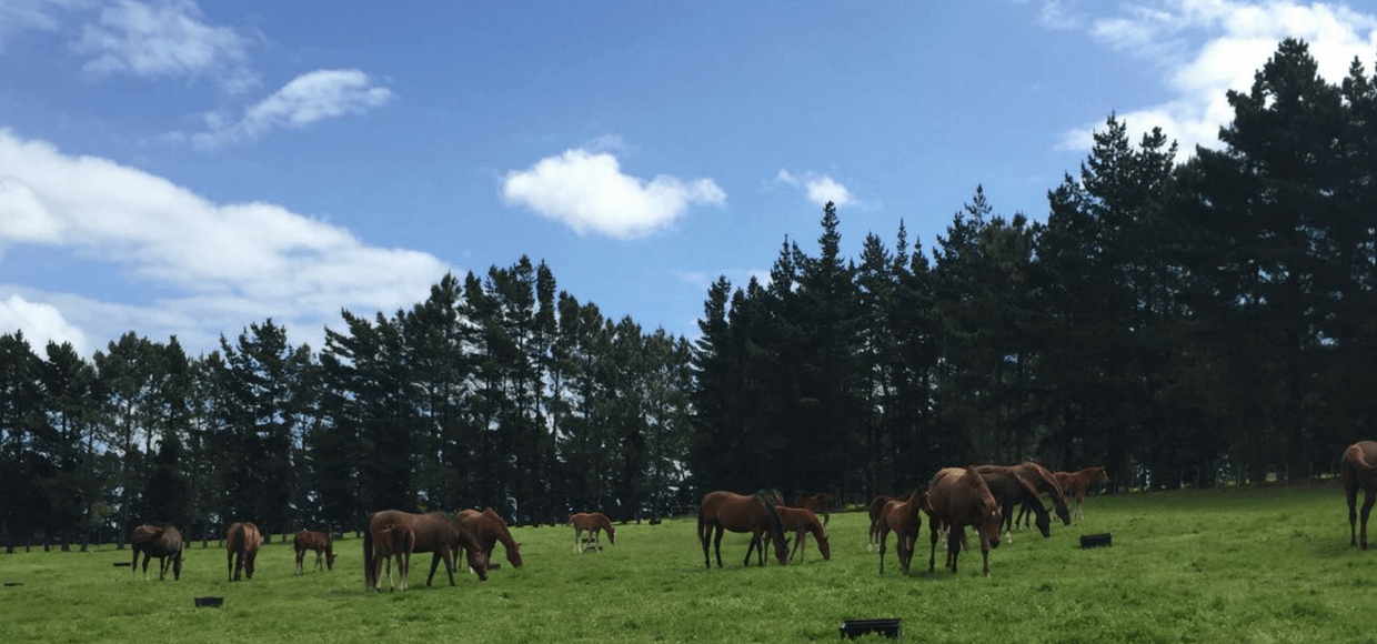 Horses Grazing on Oldlands Stud