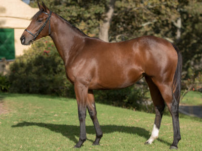 Oldlands Lot 174 - Trip To Freedom (Ashaawes/Road Tax)